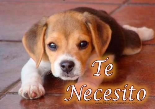 Imágenes Con Frases Divertidas Sobre Perros Y Gatos Tiernas