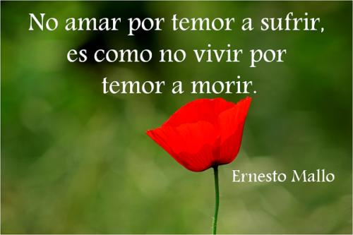 frase_celebre_amor_temor_ernesto_mallo
