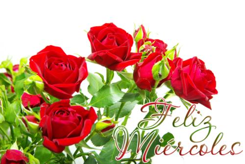 60 Imágenes Con Flores Y Mensajes Con Flores Para Whatsapp